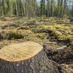 Deforestation in Punjab